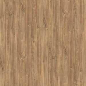H1113 ST10 Dąb Kansas brązowy